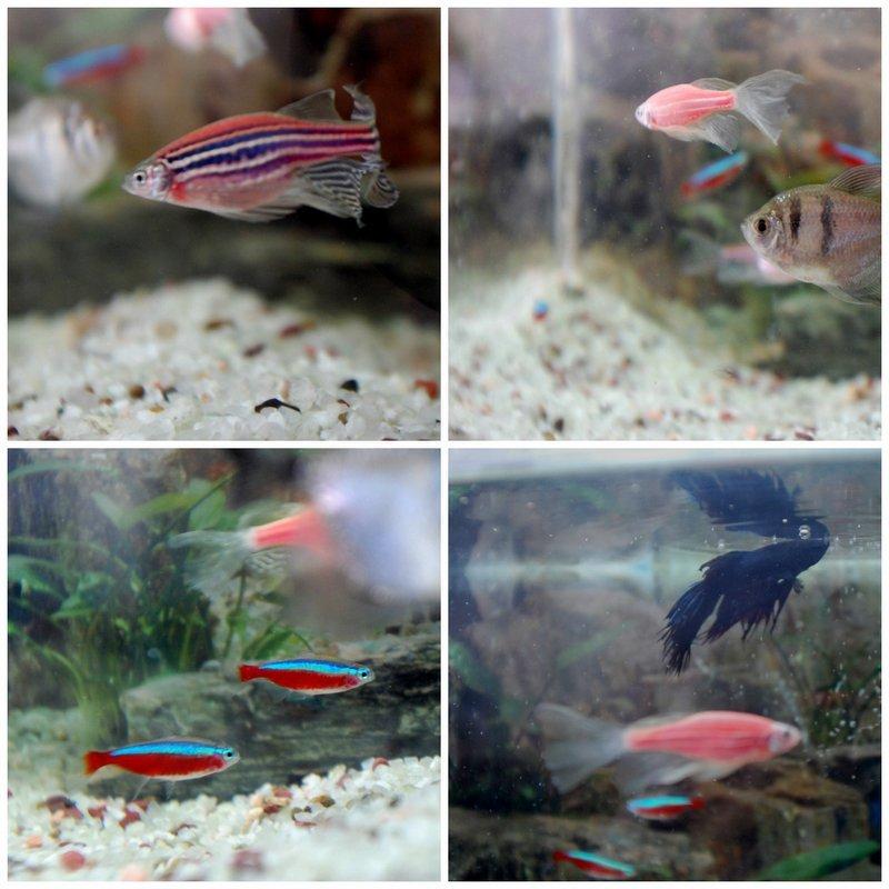 Коллаж рыбы